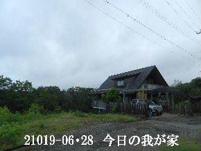 2019-06・28 今日の里山模様・・・ (1).JPG