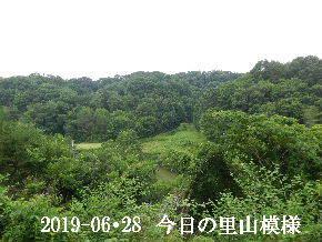 2019-06・28 今日の里山模様・・・ (5).JPG