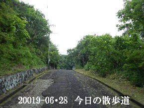 2019-06・28 今日の里山模様・・・ (6).JPG