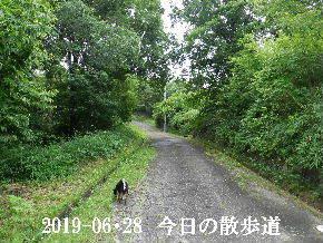 2019-06・28 今日の里山模様・・・ (7).JPG