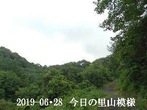 2019-06・28 今日の里山模様・・・ (8).JPG