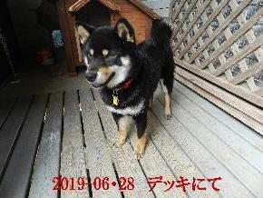 2019-06・28 今日の麻呂 (1).JPG