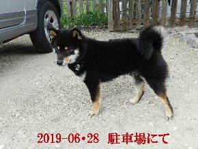 2019-06・28 今日の麻呂 (4).JPG