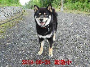 2019-06・28 今日の麻呂 (7).JPG