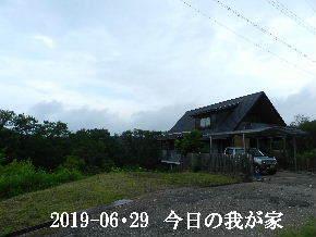 2019-06・29 今日の里山模様・・・ (1).JPG