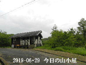 2019-06・29 今日の里山模様・・・ (2).JPG