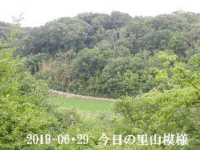 2019-06・29 今日の里山模様・・・ (3).JPG