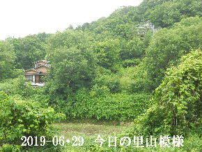 2019-06・29 今日の里山模様・・・ (4).JPG