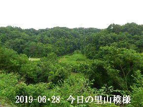2019-06・29 今日の里山模様・・・ (5).JPG