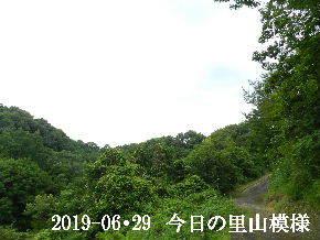 2019-06・29 今日の里山模様・・・ (6).JPG