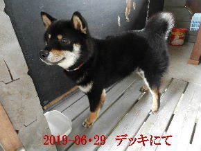 2019-06・29 今日の麻呂 (1).JPG