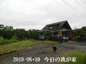 2019-06・30 今日の里山模様・・・ (1).JPG