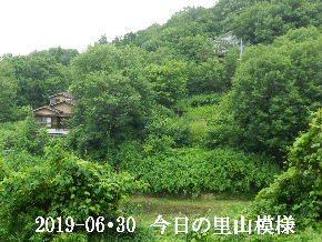 2019-06・30 今日の里山模様・・・ (4).JPG