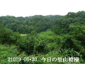 2019-06・30 今日の里山模様・・・ (5).JPG