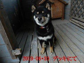 2019-06・30 今日の麻呂 (2).JPG