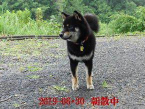 2019-06・30 今日の麻呂 (6).JPG