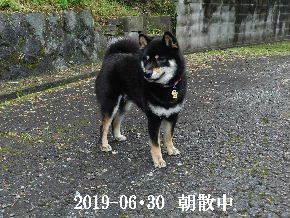 2019-06・30 今日の麻呂 (7).JPG