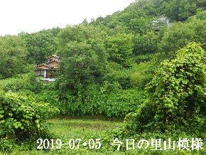 2019-07・05 今日の里山模様・・・ (4).JPG