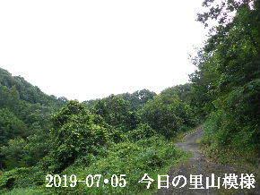 2019-07・05 今日の里山模様・・・ (6).JPG