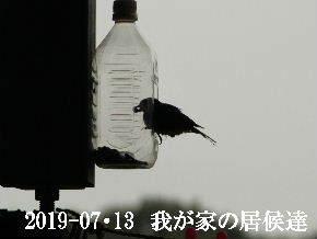 2019-07・13 里の野鳥達・・・ (2).JPG