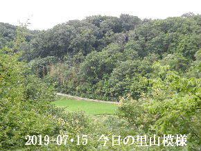 2019-07・15 今日の里山模様・・・ (3).JPG