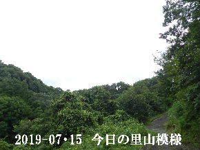 2019-07・15 今日の里山模様・・・ (6).JPG