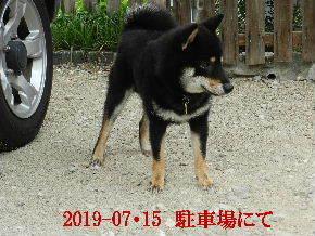2019-07・15 今日の麻呂 (3).JPG