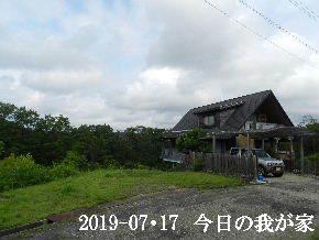 2019-07・17 今日の里山模様・・・ (1).JPG