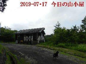 2019-07・17 今日の里山模様・・・ (2).JPG