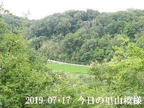 2019-07・17 今日の里山模様・・・ (4).JPG