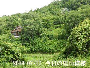 2019-07・17 今日の里山模様・・・ (5).JPG