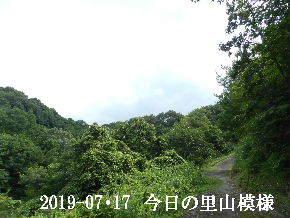 2019-07・17 今日の里山模様・・・ (6).JPG