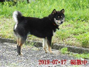 2019-07・17 今日の麻呂 (6).JPG