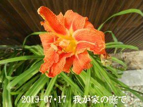 2019-07・17 我が家のスナップ・・・ (1).JPG