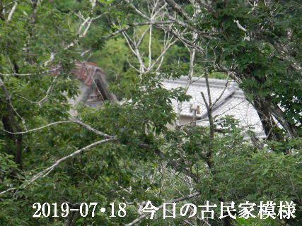 2019-07・18 今日の古民家模様.JPG