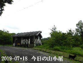 2019-07・18 今日の里山模様・・・ (2).JPG