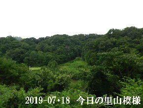 2019-07・18 今日の里山模様・・・ (3).JPG