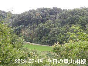 2019-07・18 今日の里山模様・・・ (4).JPG