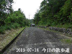 2019-07・18 今日の里山模様・・・ (5).JPG