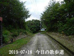 2019-07・18 今日の里山模様・・・ (6).JPG