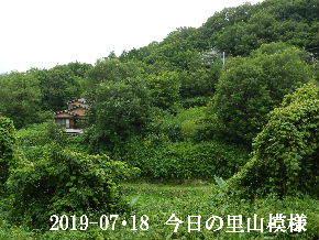 2019-07・18 今日の里山模様・・・ (7).JPG