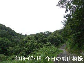 2019-07・18 今日の里山模様・・・ (8).JPG