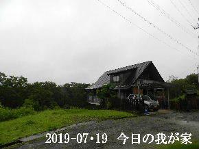 2019-07・19 今日の里山模様・・・ (1).JPG
