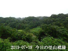 2019-07・19 今日の里山模様・・・ (3).JPG