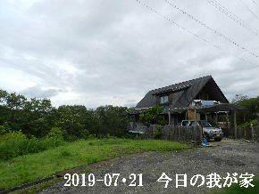 2019-07・21 今日の里山模様・・・ (1).JPG