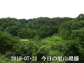 2019-07・21 今日の里山模様・・・ (3).JPG