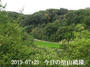 2019-07・21 今日の里山模様・・・ (4).JPG