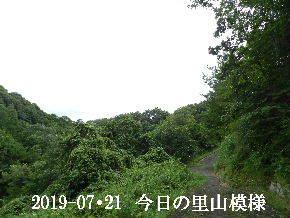 2019-07・21 今日の里山模様・・・ (6).JPG