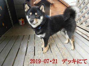 2019-07・21 今日の麻呂 (1).JPG