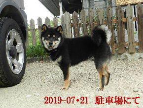 2019-07・21 今日の麻呂 (4).JPG